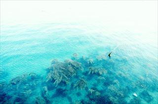 海藻の栄養素